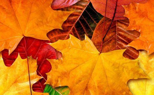 Сценарий проведения Осеннего бала в старших классах школы!