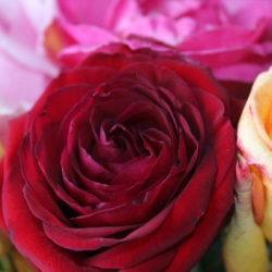 Букет роз - лучшее поздравление с др!