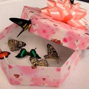 Подарочная коробка с живыми бабочками