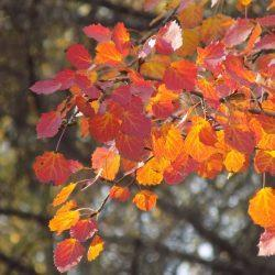 Осень - время готовиться к Осеннему балу